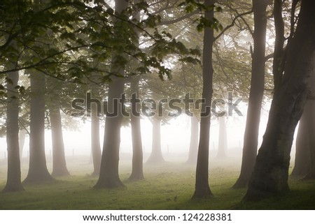 Mystic Forest, England, Europe - stock photo
