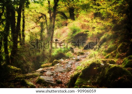 Mystic forest path - stock photo