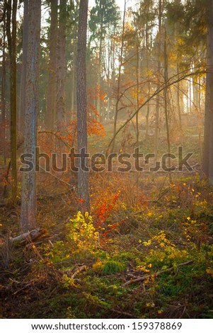 Mystic forest scene in autumn, south germany - stock photo