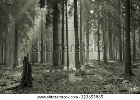"mystic forest with morning sunbeams Czech republic ""Cesky Les"" - stock photo"