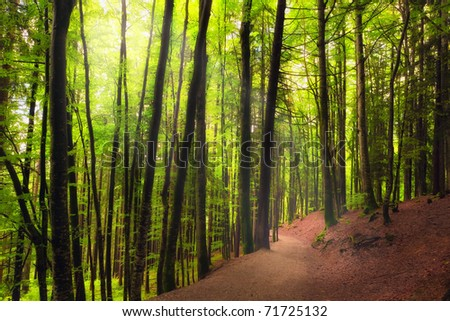 Mystic forrest path - stock photo