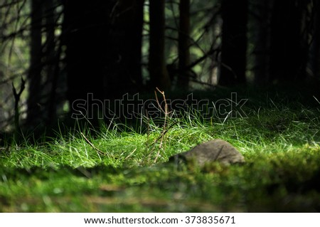 Mystic hidden forest. Green grass growing in the forest - stock photo
