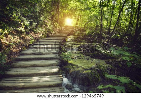 Mystic journey ahead. a quiet lane on a beautiful forest with stream - stock photo