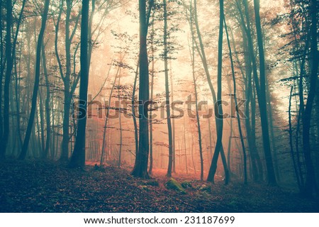 Mystic light and vintage color autumn forest. Vintage filter effect used. - stock photo
