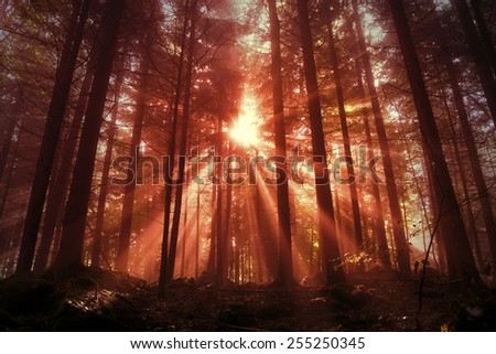 Mystic red saturated forest scene with sunbeams. Red color filter used. - stock photo