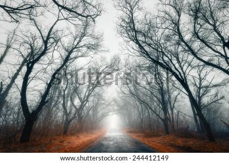 Mystic Road (Ukraine)  - stock photo