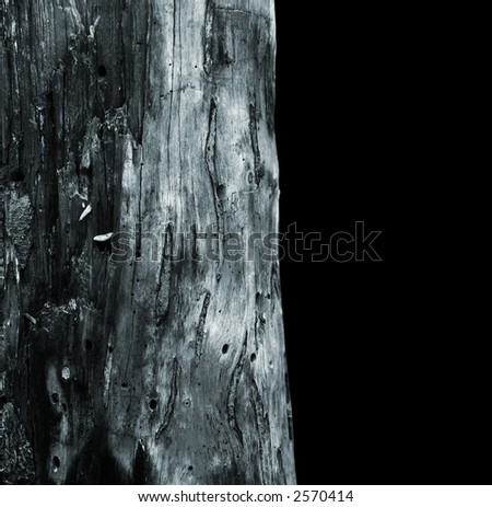 Mystic tree texture isolated on black background. - stock photo