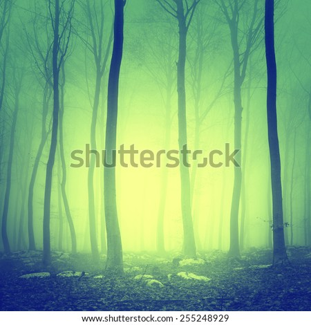 Mystic yellow green light forest scene background. - stock photo