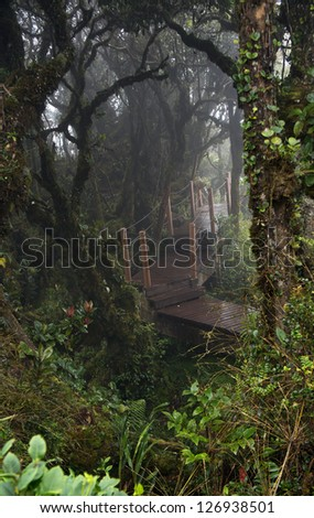 Mystical and beautiful famous green Mossy Forest in Cameron Highland - stock photo