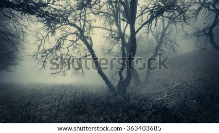 Mystical autumn forest with green fog in the morning. Beautiful landscape. Vintage style