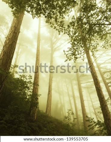Mystical deep fog in a forest . - stock photo