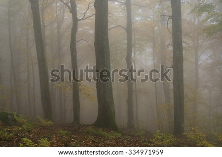 Mystical foggy forest in autumn colours. - stock photo