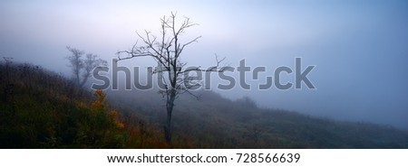 Mystical foggy landscape with single tree on the bank of the Volga river, panorama banner for web or print