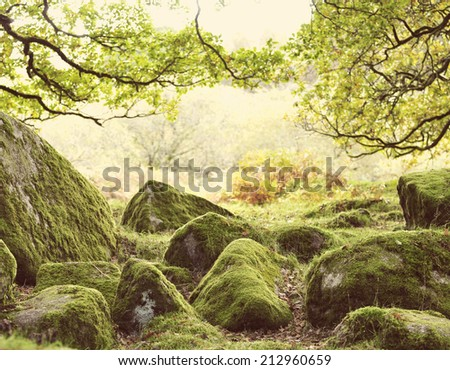 Mystical forest background with instagram style filter. - stock photo