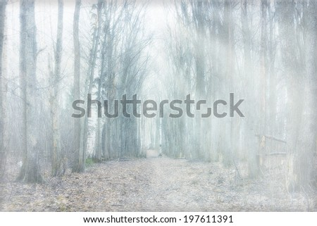 mystical forest fog - stock photo