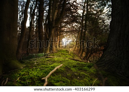 mystical forest footpath with green moss leading between dark trees to the  light, selected soft focus and narrow depth of field - stock photo