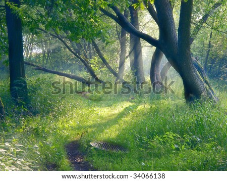 Mystical forest landscape with sun-rays thought fog - stock photo