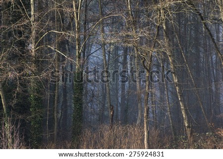mystical forest with fog and sunlight  - stock photo