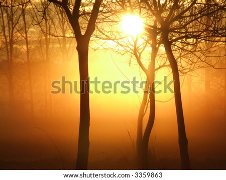 Mystical sunrise in a forest on a misty morning - stock photo