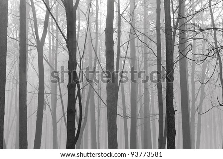 Mystical wood in the foggy morning - stock photo