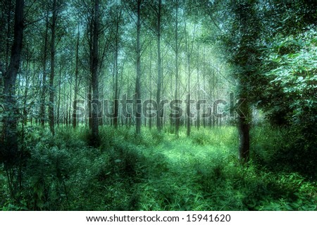Mystical Woods - stock photo