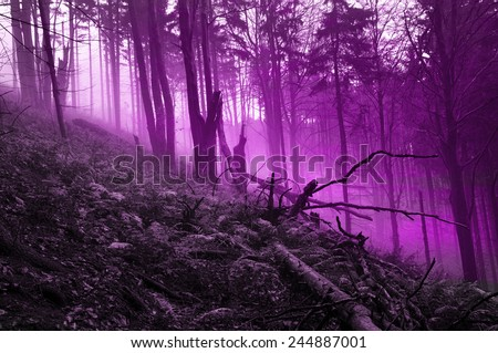 Myth mystery forest - stock photo