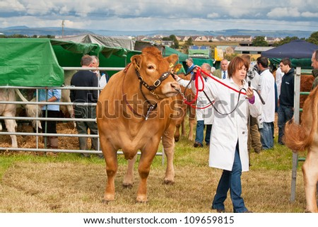 NAIRN, SCOTLAND - JULY 28: An unidentified farmer displays her cattle at the annual Nairnshire Farmers Society show on JULY 28, 2012 in Nairn, Scotland. - stock photo