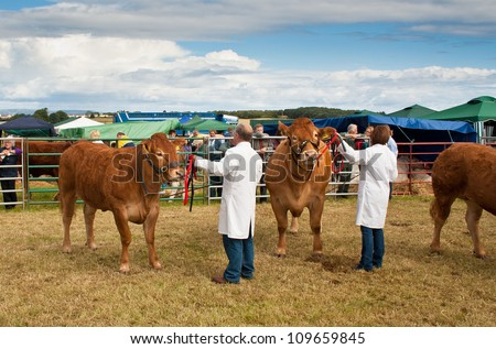 NAIRN, SCOTLAND - JULY 28: Unidentified farmers display their prize winning cattle at the annual Nairnshire Farmers Society show on JULY 28, 2012 in Nairn, Scotland. - stock photo