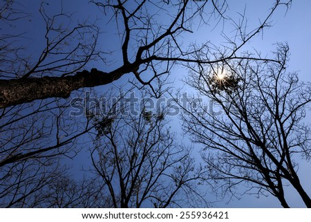 Naked branches of tree in forest and sun sky background..