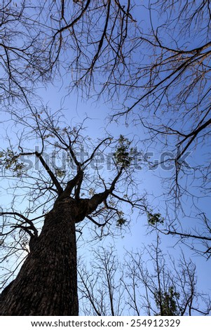 Naked branches of tree with sky background. - stock photo