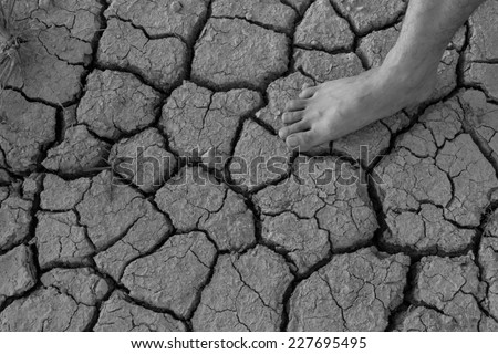 Naked human barefeet on dry soil with growing tree background