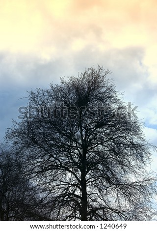Naked tree in dramatic sunset - stock photo