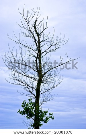 Naked tree in front of a dark cloudy sky