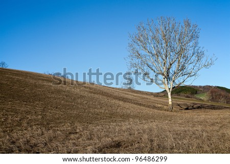Naked tree on a hill in a winter sunny day