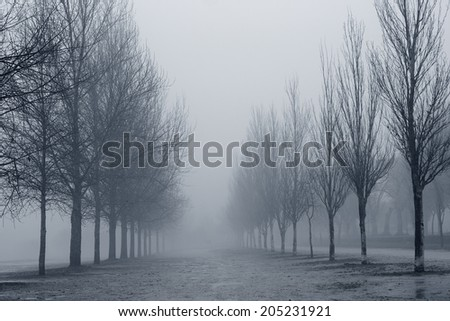 Naked trees from Ponte de Lima park, north of Portugal, in a winter foggy afternoon - stock photo