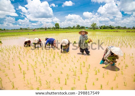 NAKONPRANOM, THAILAND. JUNE 8, 2014.Thai Women Farmers transplant rice seedlings on the plot field at Nakonpranom Province, Thailand - stock photo