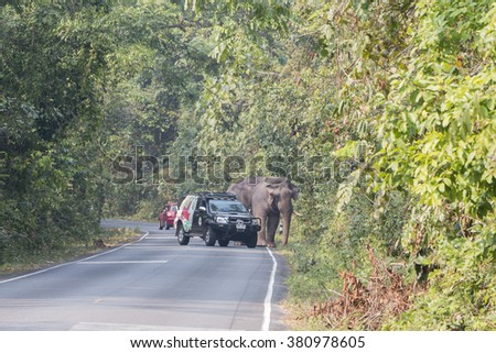 Nakornratchasima, Thailand - February 20, 2016: Park Rangers Authorities try to use the car to guide the Elephants back into the forest at Khao yai national park.