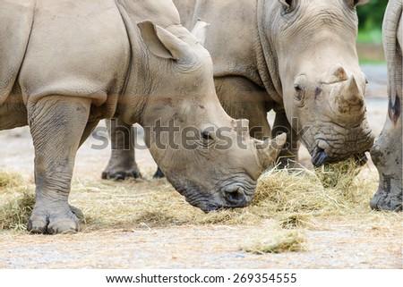 Nakuru rhinos - stock photo