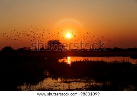 Namibia beautiful african sunrise reflected on lake - stock photo