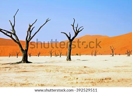 Namibia, Namib Desert, Dead Vlei - stock photo