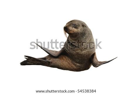 Namibia - Sea lion - stock photo