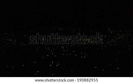 Nanto, Taiwan - May 1, 2014: Firefly glowing in the forest. - stock photo