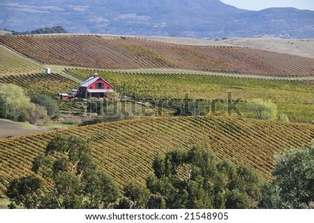 Napa Valley - stock photo