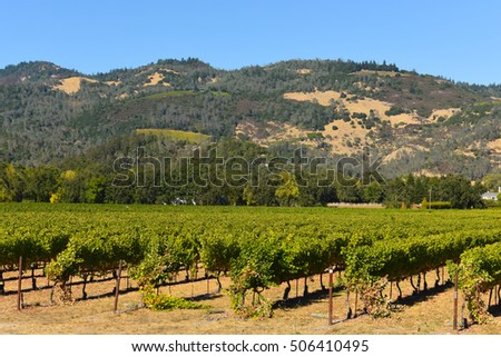 Napa Valley California Vineyard