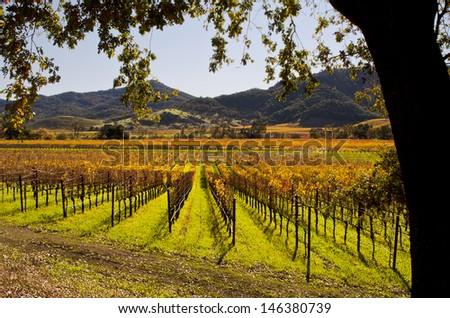 Napa Valley in Autumn - stock photo