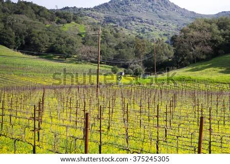 Napa valley landscape (California) - stock photo