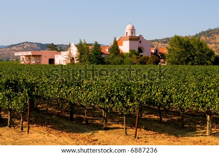 Napa Valley vineyard - stock photo