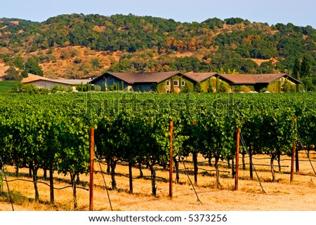 Napa Valley vineyard at sunset - stock photo