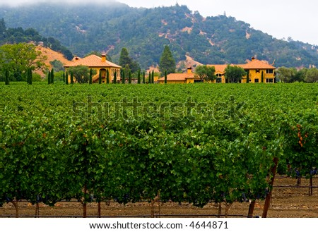 Napa Valley vineyard California - stock photo