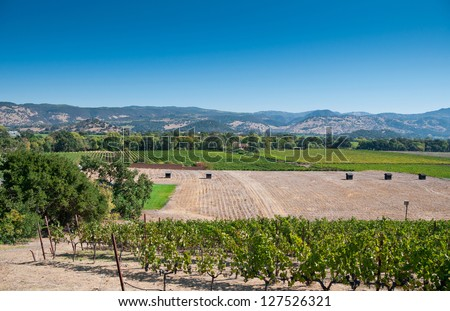 Napa Valley Vineyard, California, USA - stock photo
